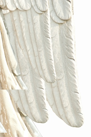 angel wing Stock Photo - 10692297