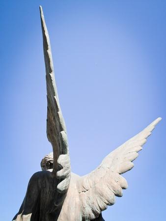 angel wings photo