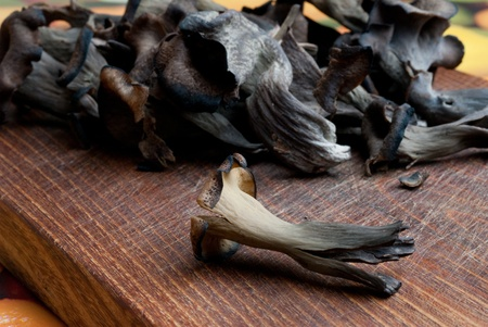 Craterellus cornucopioides  - black mushrooms eatable