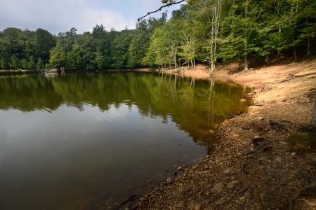 本影森林 - 加爾加諾國家公園 - 普利亞 - 意大利