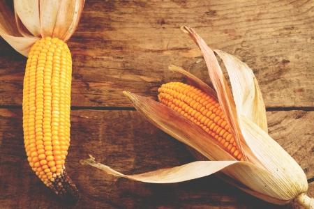 forage: Forage corn