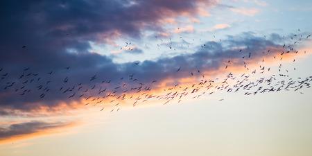 flight at sunset photo