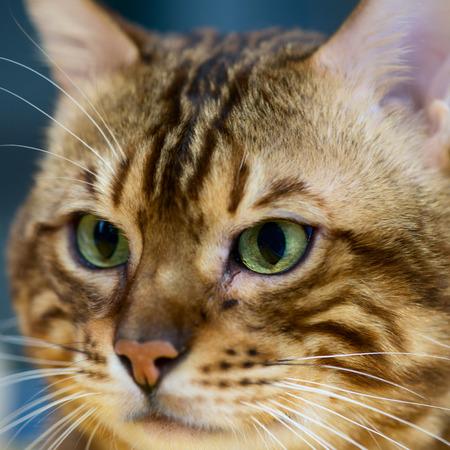 snout: scottish cat snout