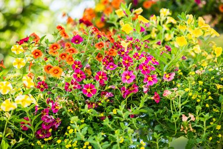 alternative: alternative flowers roof garden