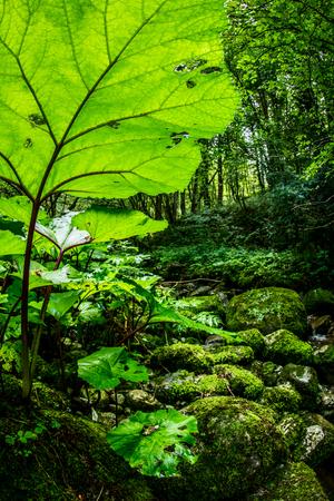 vegetation: lush vegetation