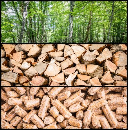 biomasa: la producción de pellets de madera