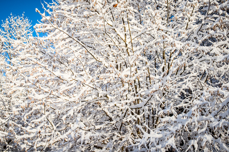 wintry weather: beautiful tree branches snowy and blue sky Stock Photo
