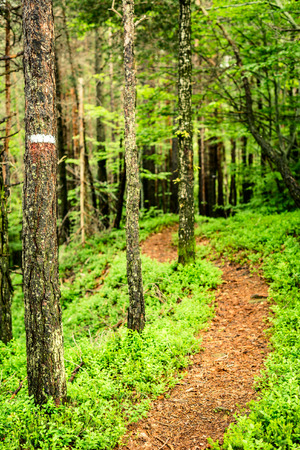 trail sign: Trail sign in the forest - outdoor activity in italy
