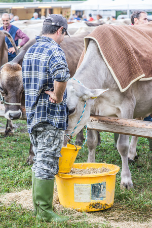 breeder: SERINA, ITALY - SEPTEMBER 21.2016: cattle exhibition and contest at Brembana Valley, Serina, Bergamo, Italy. Breeder and italian brown cow.