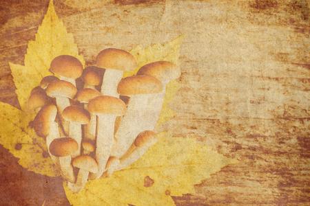 autumn mushrooms on wooden background - vintage style