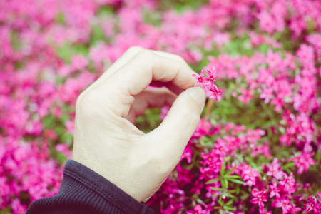 man holding a little flower with his hand - outdoor activity and spring season