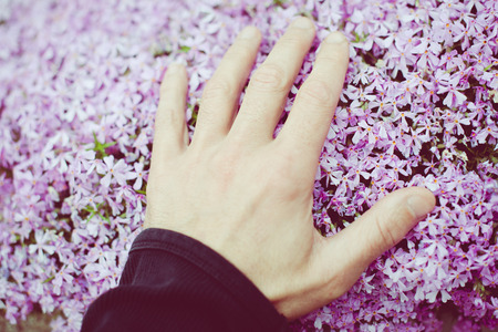 man caresses little flowers with his hand - outdoor activity and spring season 版權商用圖片