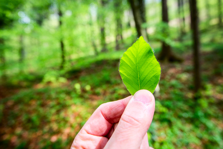 man holding a leaf in his hand - outdoor activity and spring season 版權商用圖片