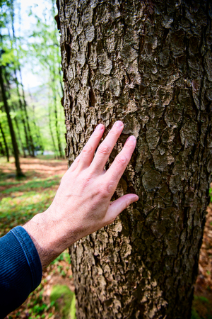 man caresses the bark of a fir tree - outdoor activity and spring season