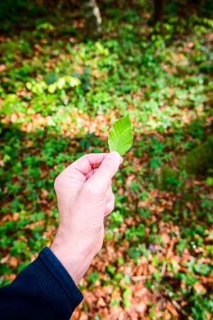 man holding a leaf in his hand - outdoor activity and spring season Stok Fotoğraf