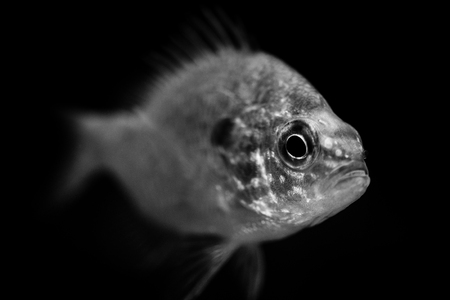 fish - black and white animals portraits