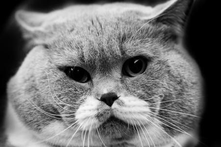 Cute cat - black and white animals portraits Stock Photo