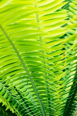 tropical palm leaves close up - botanical backgrounds 版權商用圖片