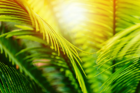 tropical palm foliage and hot sunlight - tropical travel or product concept 版權商用圖片