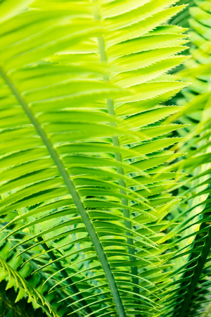 熱帶棕櫚葉特寫 - 植物學背景