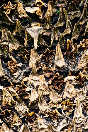 palm bark - botanical backgrounds