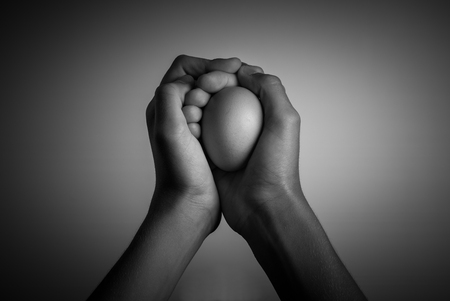 egg in human hands - black and white image 版權商用圖片 - 97579190