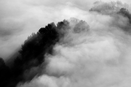trees in the fog - black and white photo 版權商用圖片 - 99233475