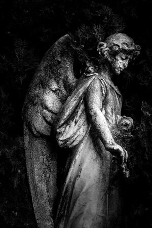 angel - black and white image 版權商用圖片