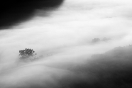 trees in the fog - black and white photo