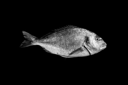 sea bream isolated on black background