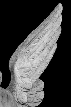 angel wing isolated on black background 스톡 콘텐츠