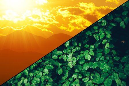 Photosynthese - grüne erneuerbare nachhaltige Wirtschaft