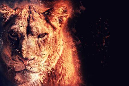 énergie de lionne