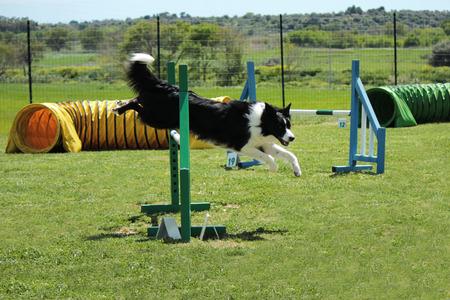 patas de perros: Agilidad del perro
