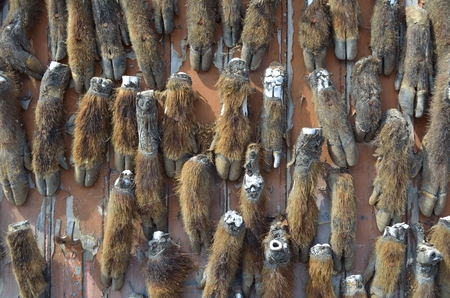 animal parts: The custom of Hunters in Southern France to attach animal parts to the door.