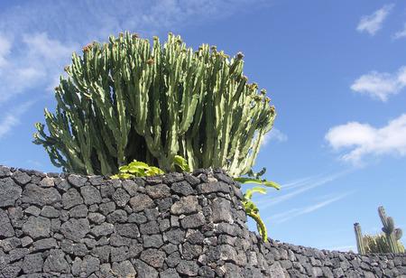 lanzarote: Blue Sky and Cactus Lanzarote Stock Photo