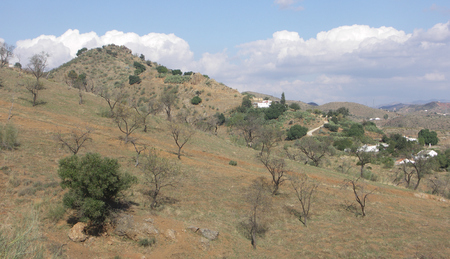 hillside: Almond Trees on Hillside Spain Stock Photo