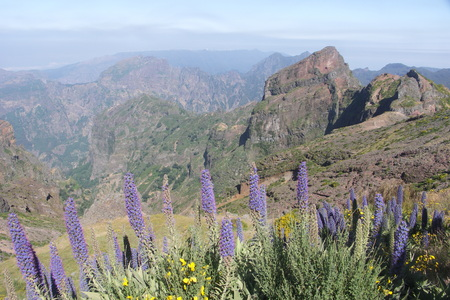 Pride of Madeira and Mountain Tops