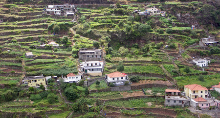 terracing: Terraces in the furtile soil of Madeira