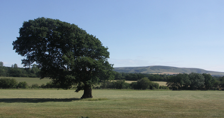 Leaning Tree and South Downs