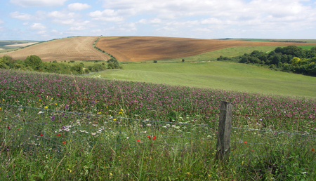 south downs: South Downs Landscape, Wild Flowers and Fence Stock Photo
