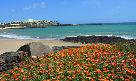 View of the Beach at Costa Teguise Lanzarote  with Orange Flowers in the Forground.