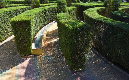Part of Hedge Maze with Water feature