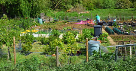 ST NEOTS, CAMBRIDGESHIRE, ENGLAND - MAY 18, 2020: Two people working on allotment on a sunny day.