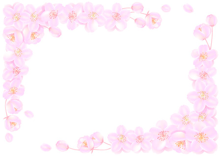 Frame of cherry blossoms  Vector