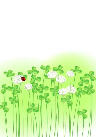 Ladybug in clover sunny spot  photo