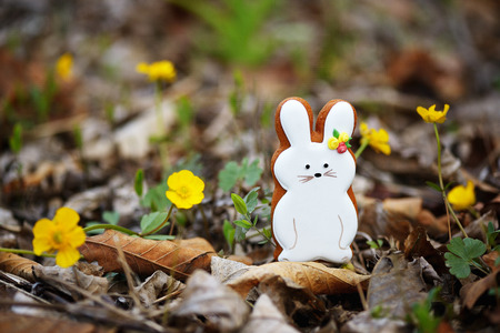 lop lop rabbit white: Easter hare on the green lawn Stock Photo