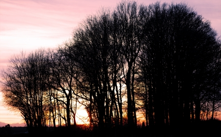 siluettes: Sunset with the siluettes of trees and sun rays. Stock Photo