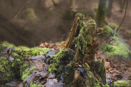 A rootstalk in the forest with moss on it . and sunbeams in the background photo
