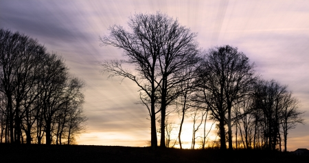Sunset with the siluettes of trees and sun rays. Stock Photo